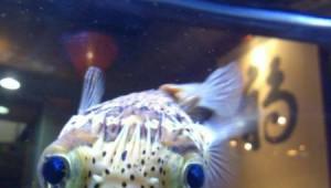 Αυτό το ψάρι