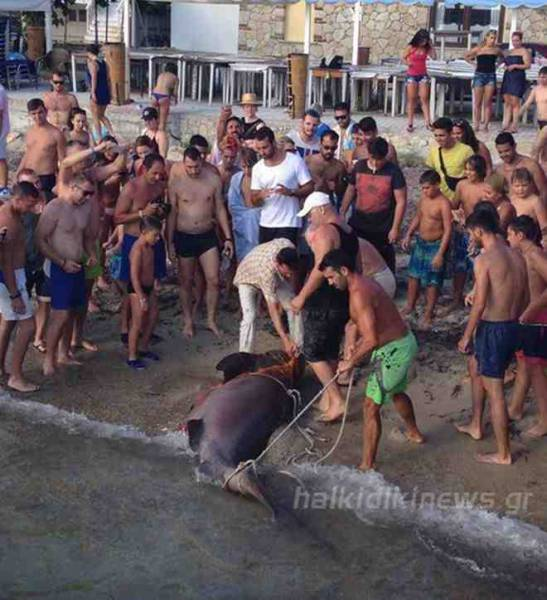 Πηγή photo: halkidikinews.gr