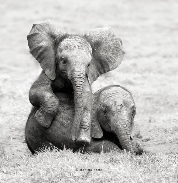 22 εκπληκτικές φωτογραφίες άγριων ζώων που θα λατρέψετε