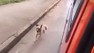 dog_chases_ambulance_featured