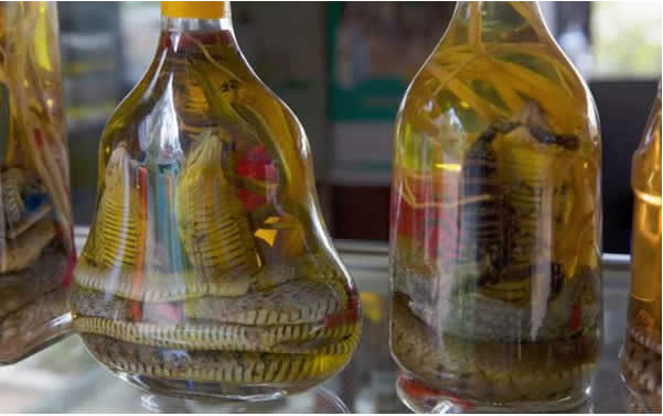 snake wine south east asia