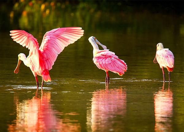 Φωτογραφίες από τεράστιο πουλί